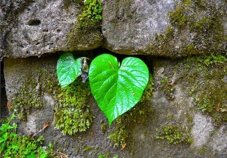 pascoa é vida nova, como uma árvore frágil que germina e começa a crescer nas frestas de um muro de pedra, mostrando a força da vida